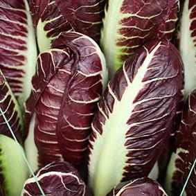 radicchio-european-salad-company.jpg