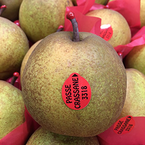 Passe Crassane pears at European Salad Company