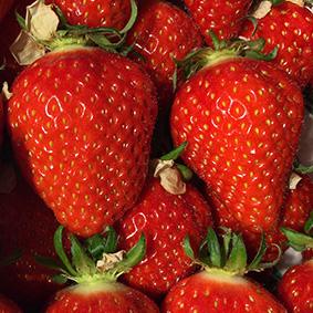 garuigette-strawberries-european-salad-company.jpg