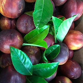 european-salad-company-plums.jpg