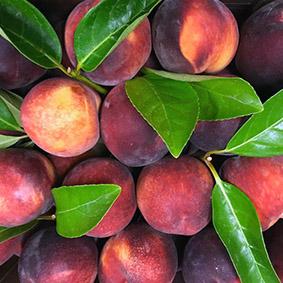 peaches-european-salad-company.jpg