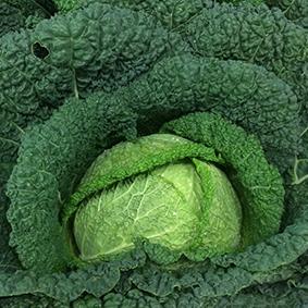 european-salad-company-savoy-cabbage.jpg