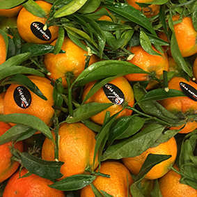 european-salad-company-clementines.jpg