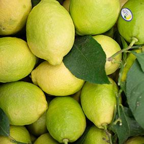 lemons-european-salad-company.jpg
