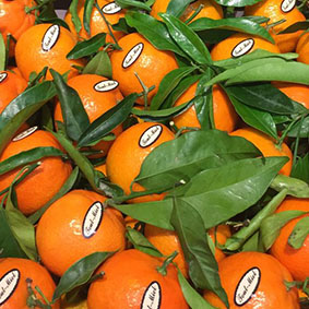 clementines-european-salad-company.jpg