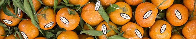 banner-december-market-report-european-salad-company.jpg
