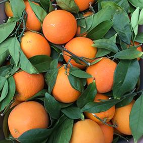 european-salad-company-oranges.jpg