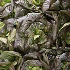 european-salad-company-lettuce.jpg