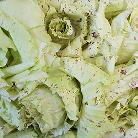 european-salad-company-castelfranco.jpg