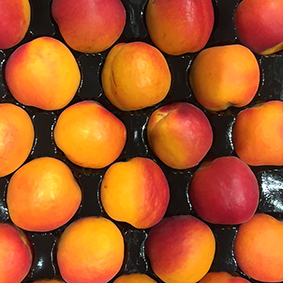 european-salad-company-apricots.jpg