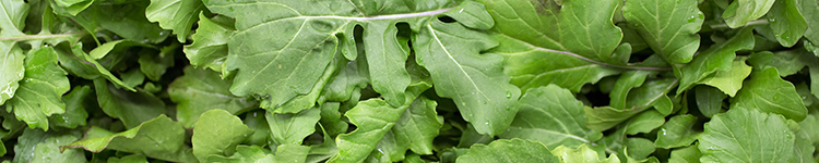 european-salad-company-february-banner.jpg