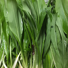 european-salad-company-wild-garlic.jpg