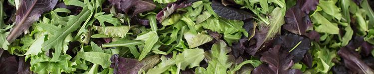 banner-market-report-european-salad-company.jpg