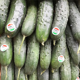 esc-cucumber.jpg