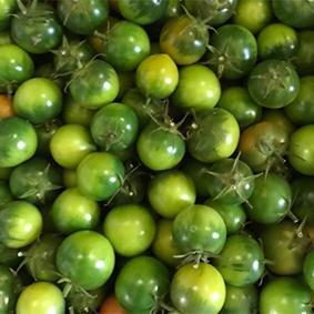 green-tomatoes-esc.jpg