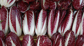 Precoce - This variety arrives earlier than Tardivo. Available from around October to May.