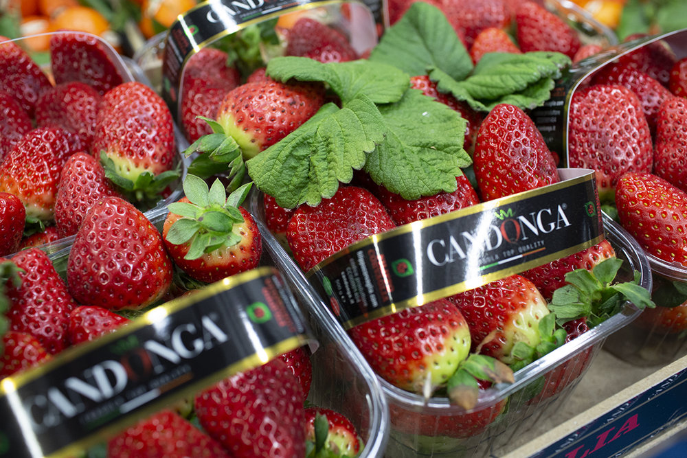 Candonga  - A famous Italian variety - excellent flavour.