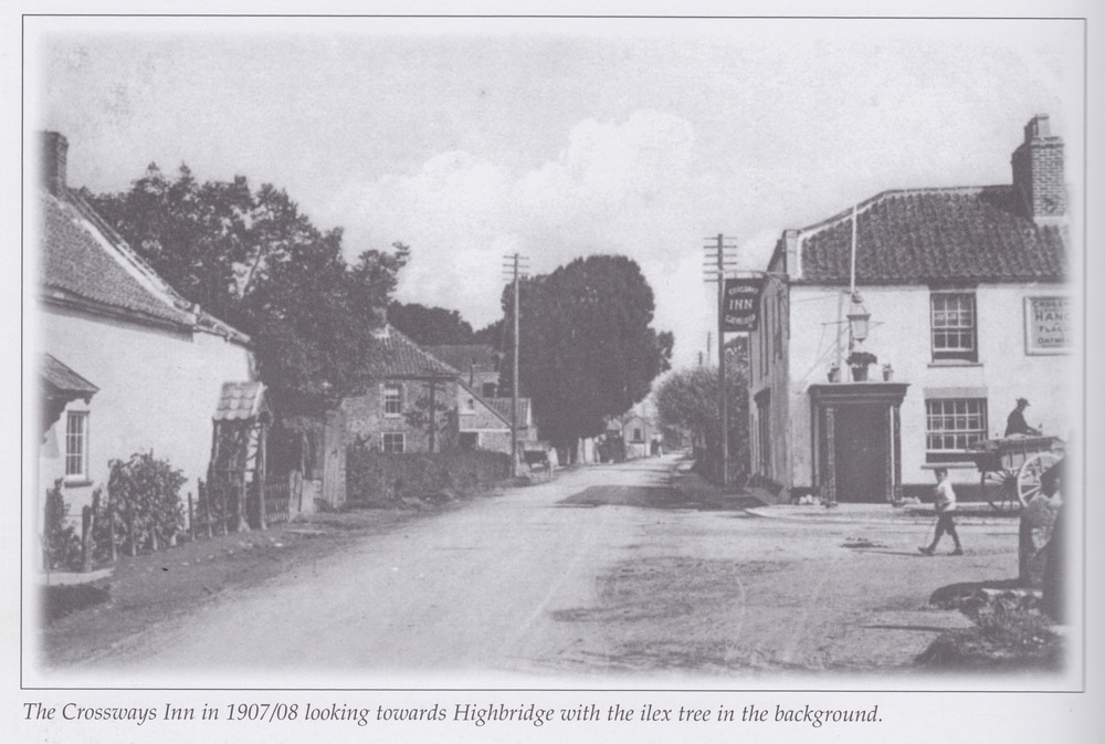 The Crossways Inn in 1907/08, looking towards Highbridge with the ilex tree in the background.