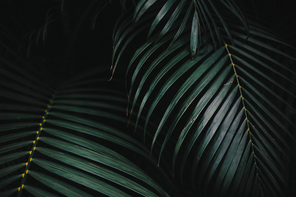 detail of palm leave in hawaii