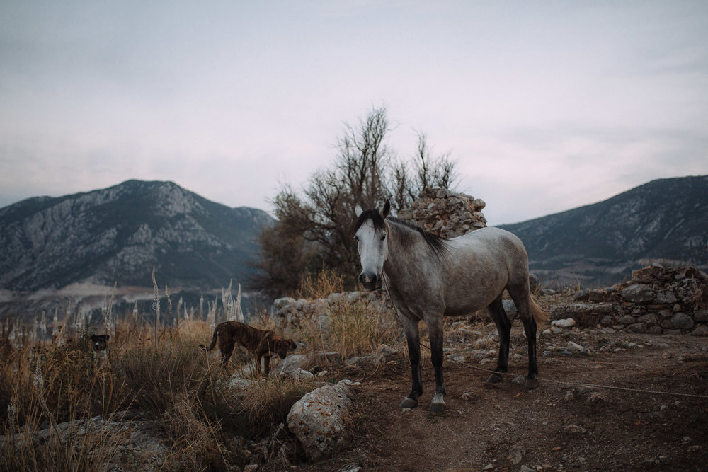 a horse and a dog on a island in greece during dusk
