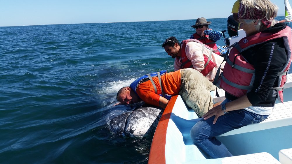 Whale watching in Baja California
