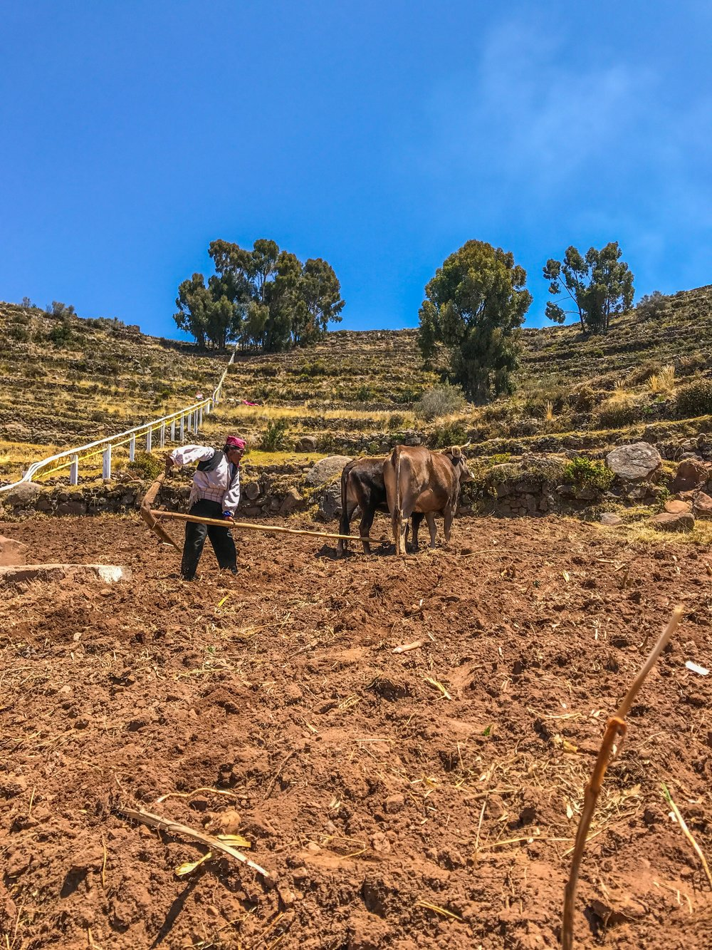 Taquile men leave their knit caps on even while working the fields
