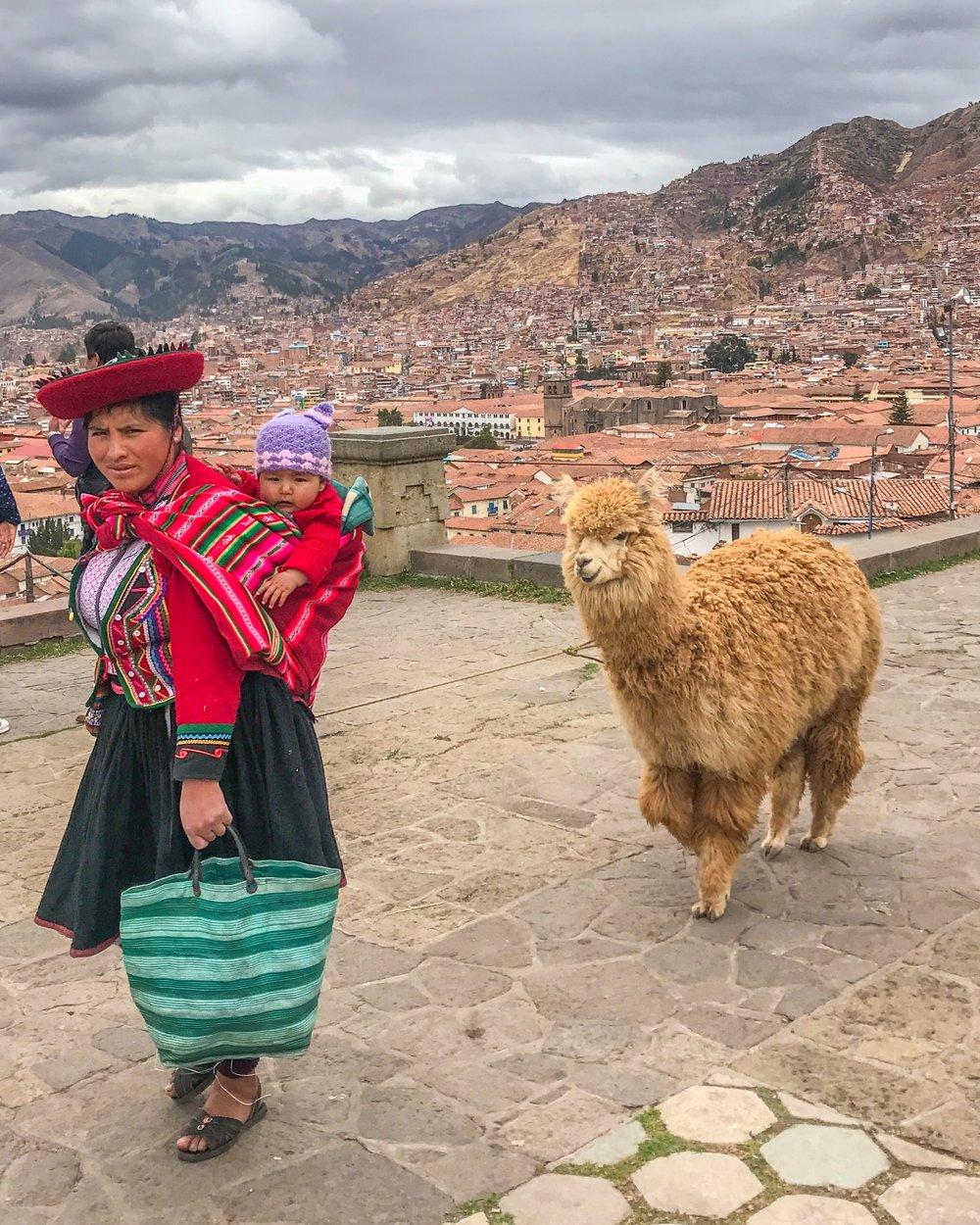 Greeting llamas in Cusco