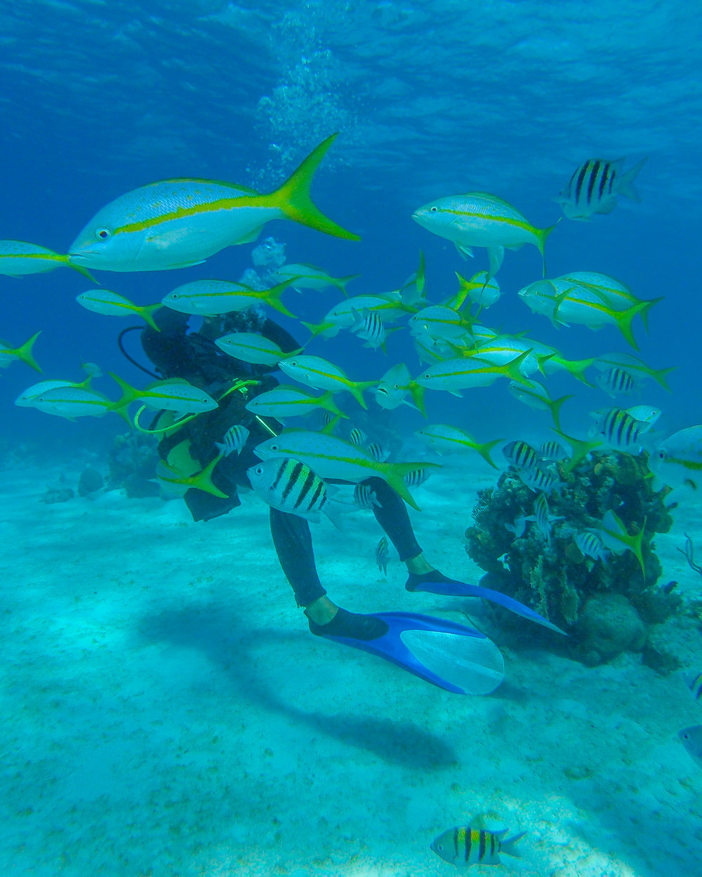 Scuba diving in the Bay of Pigs with travel insurance