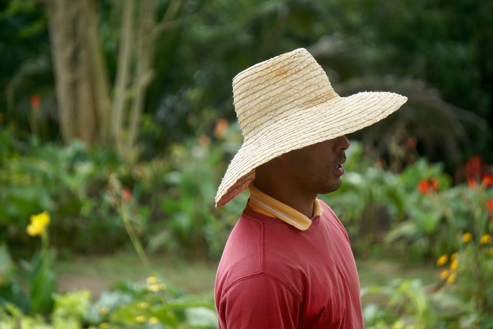 Organic farming continues to be the norm in Cuba