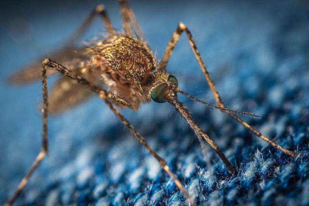 Take precautions in mosquito-prone areas