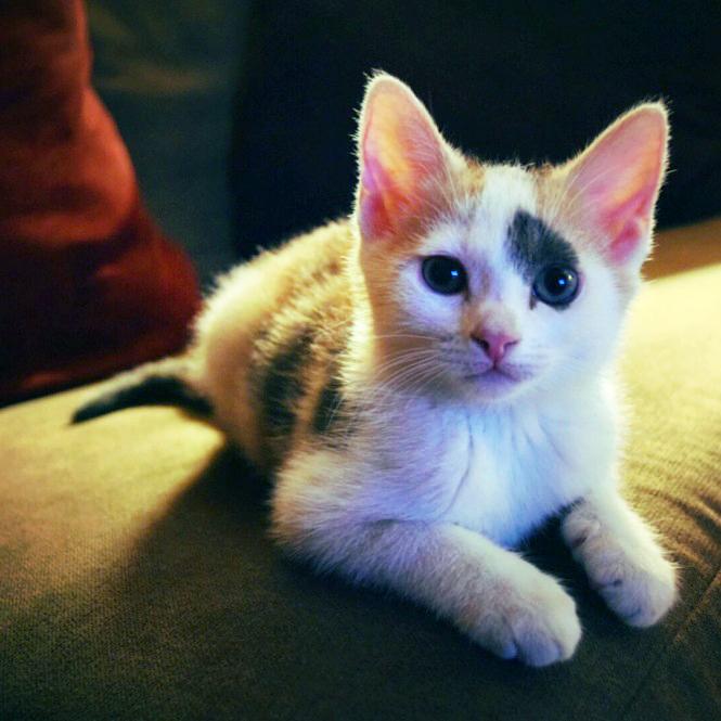 Willie The Cat
