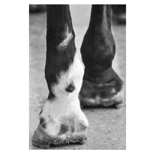 Hooves by Holly Roesch