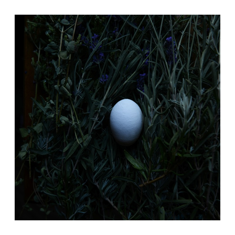 Egg and Lavender by Lucy Snowe