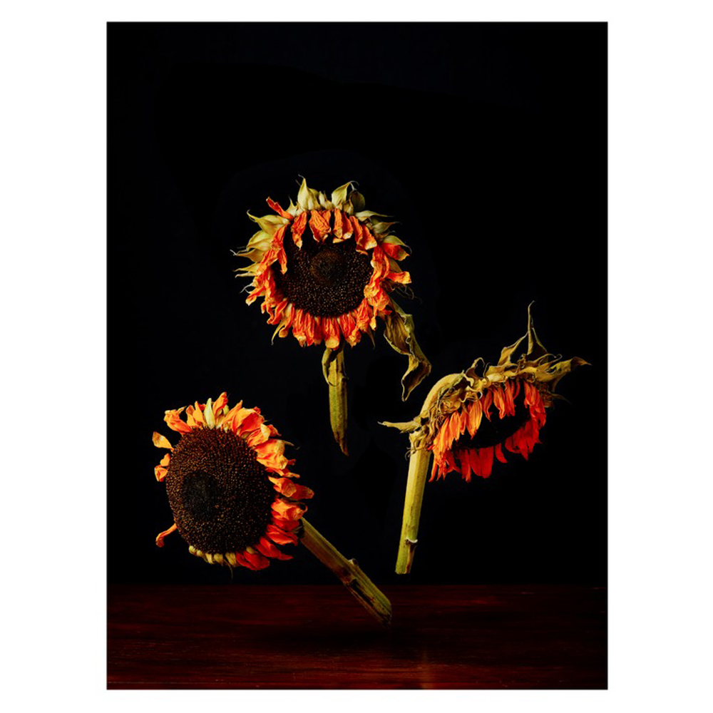 Sunflowers by Dustin Halleck