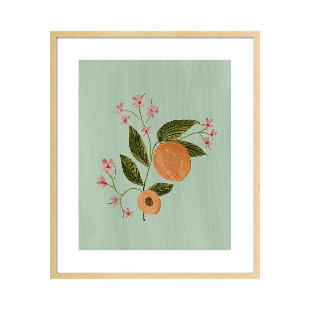 Peach Botanical Illustration  BY NANCY NORETH