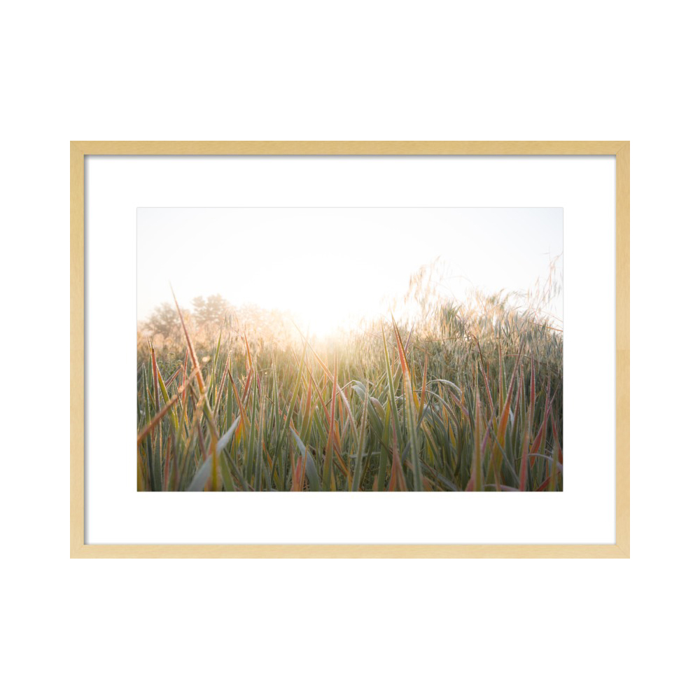 Wild Grasses  BY AMY KIMBALL