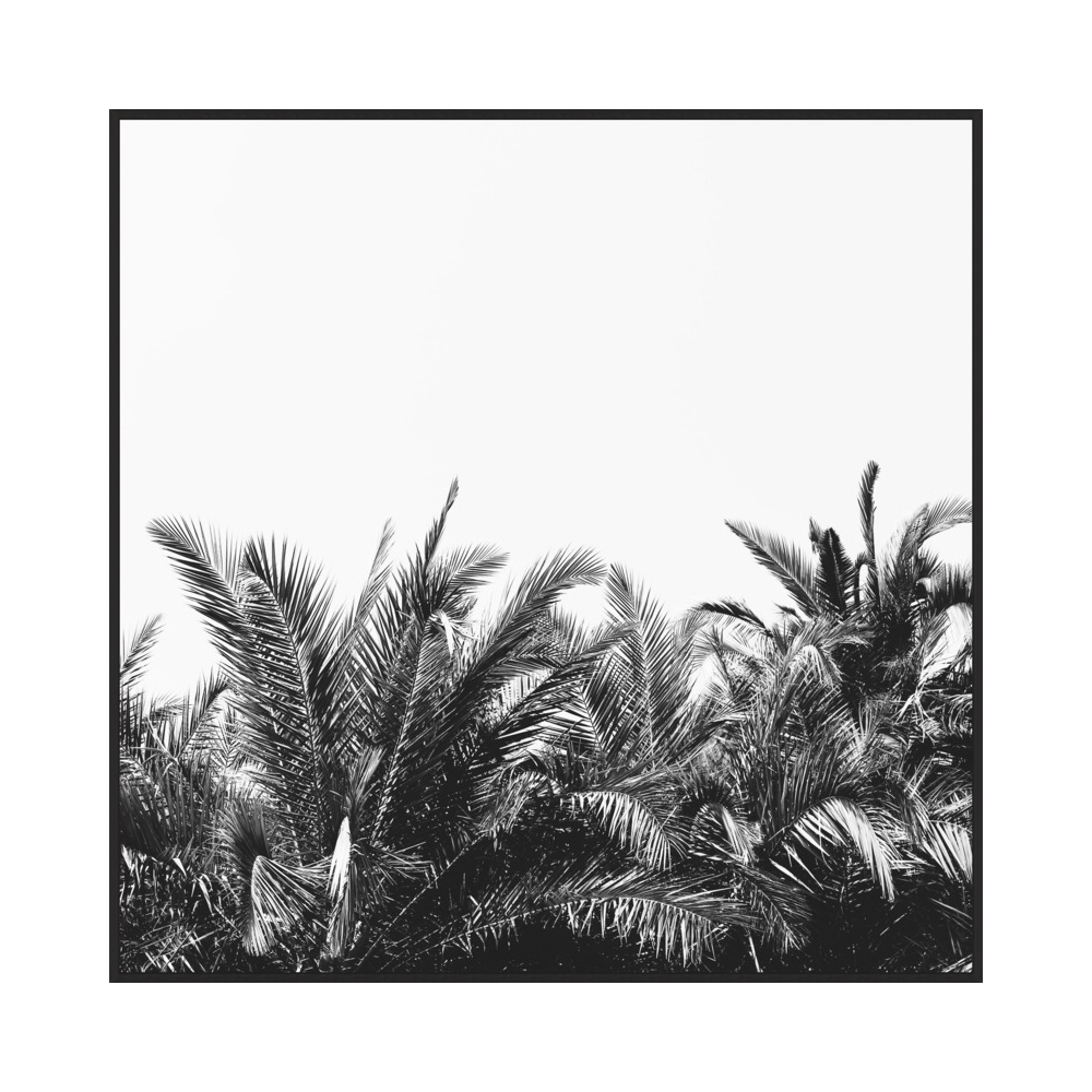 Palm Breeze  BY ALICIA BOCK