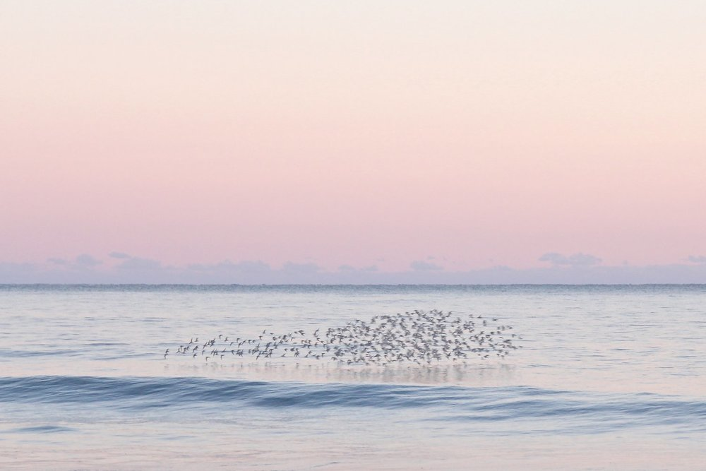 """Flock"" by Lauren Marttila, who recalls the photo as ""A moment in time, when the birds formed the shape of a whale against the most beautiful pink sky I've ever seen."""
