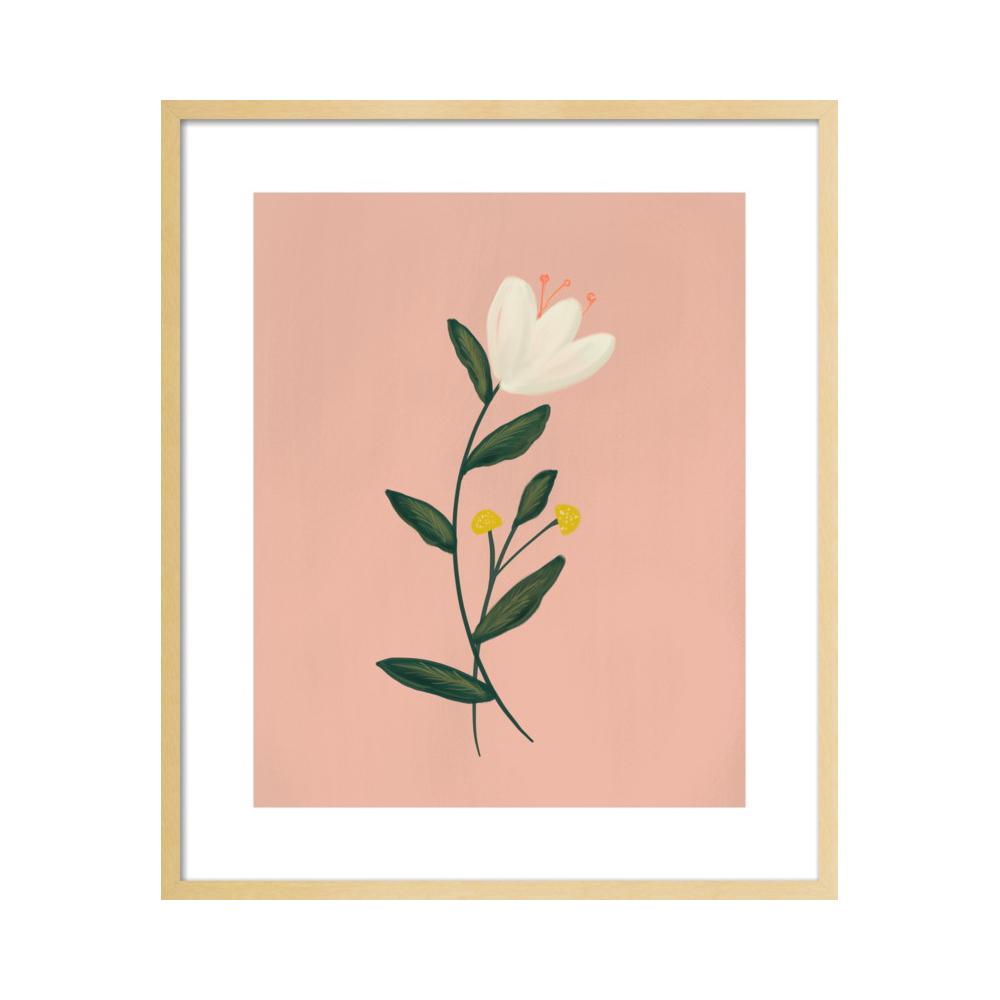 Botanical Illustration No. 3  BY NANCY NORETH