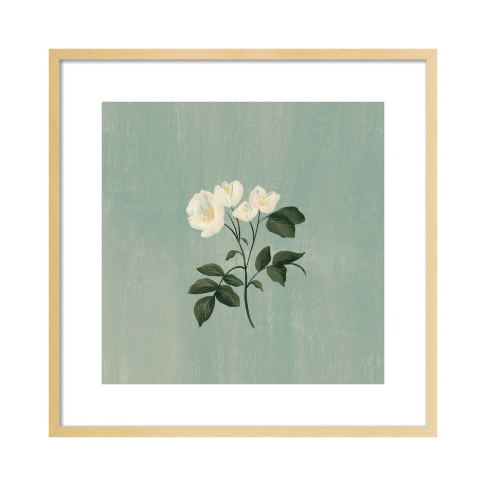 White Roses  BY NANCY NORETH