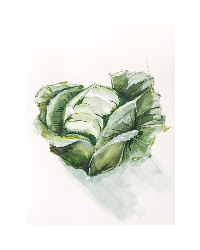 cabbage still life  BY BECKY AUBRY