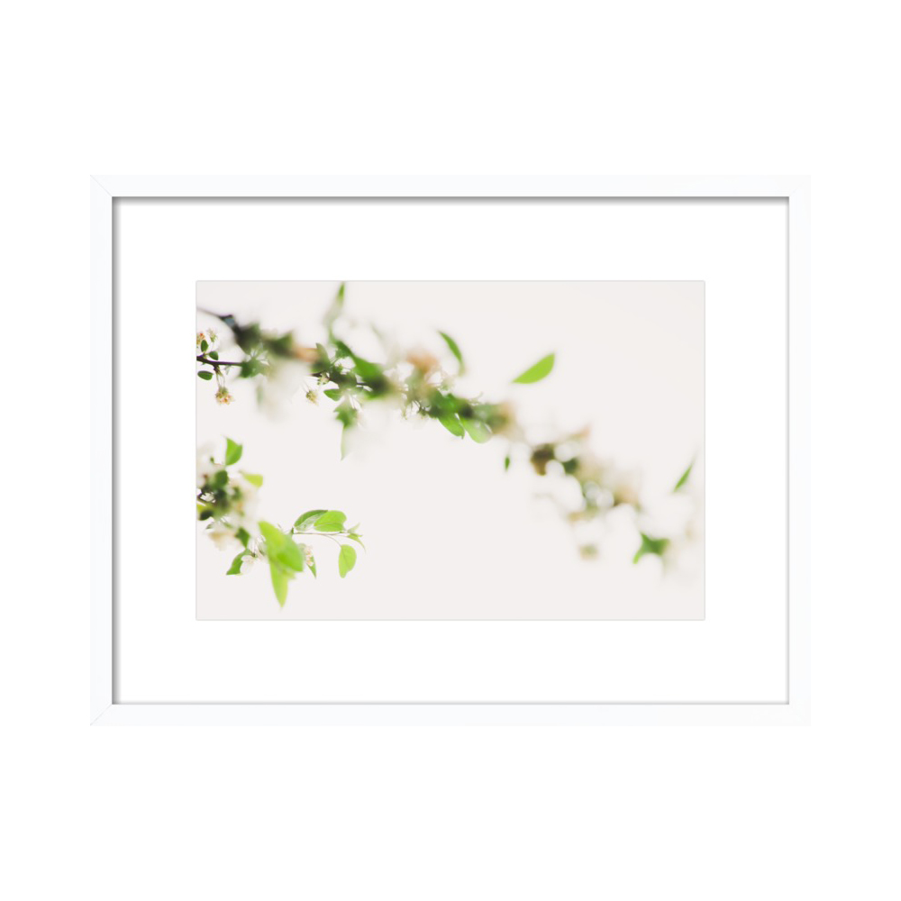 Soft Spring in White  BY MARIELLE SOLAN