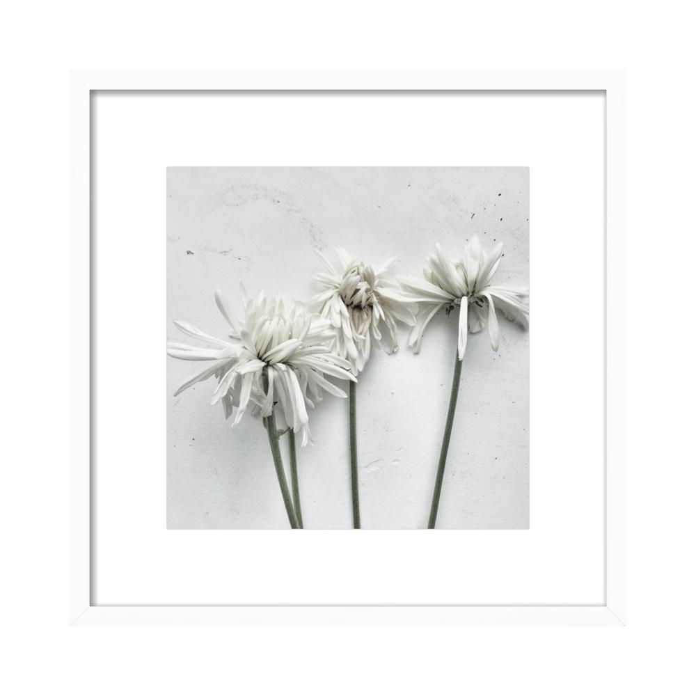 Floral 3  BY ERIK MELVIN