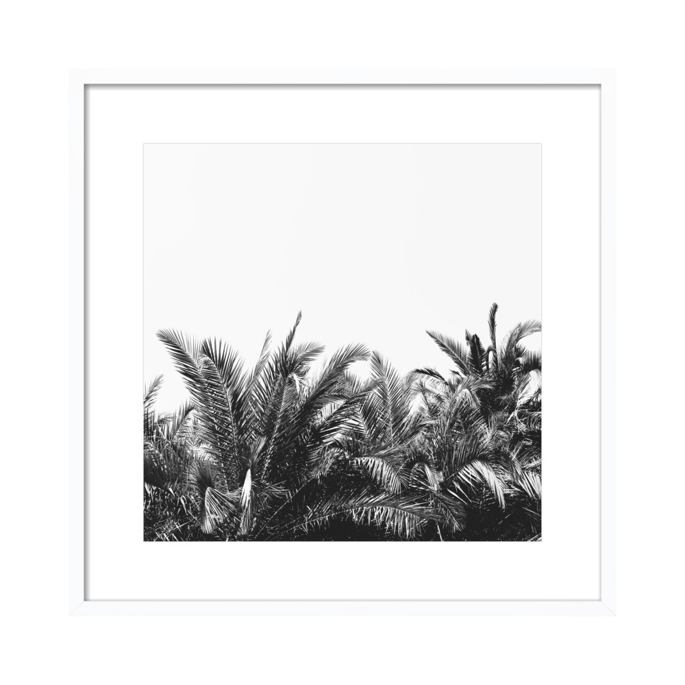 Palm Breeze  BY ALICIA BOCK