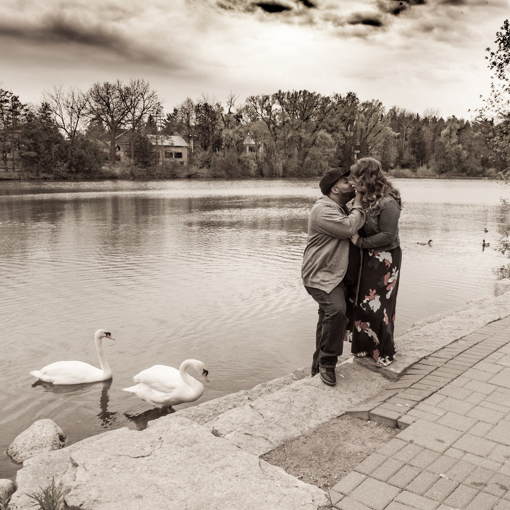Mill pond Engagement Photo session couple with swans