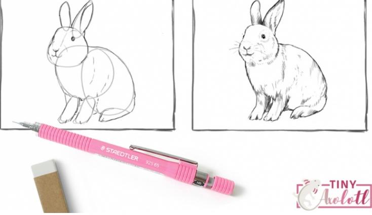 Let's Draw Bunnies by Luci Tiny Axolotl