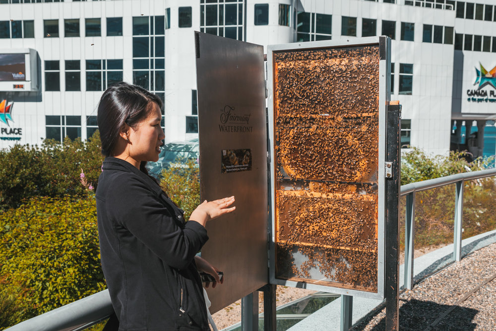 Honey bee tour at the Fairmont Waterfront // The Quick Guide to Visiting Vancouver, BC #readysetjetset
