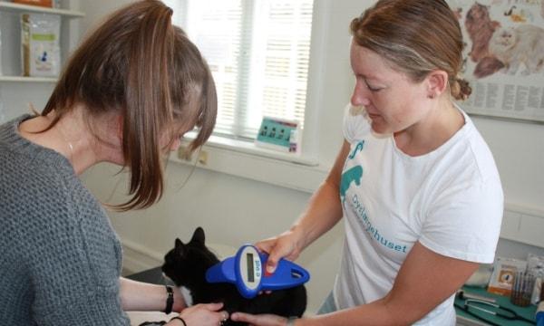 Chipmærkning af kat hos dyrlægen.