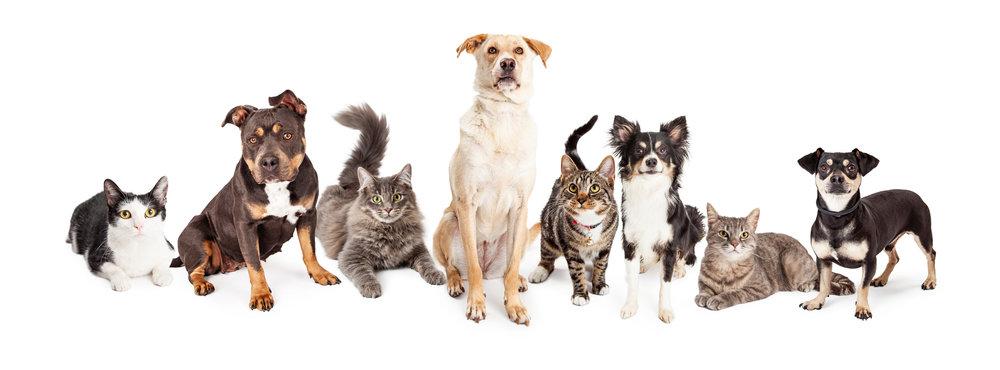 Hunde og katte patienter.