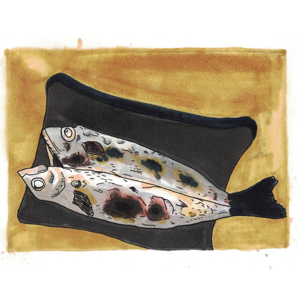 Split Fish.jpg